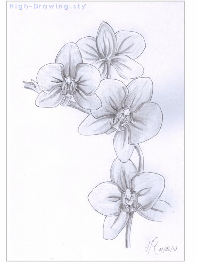 Blog de high drawing blog de high drawing - Dessin orchidee a imprimer ...