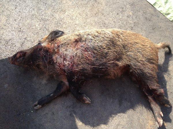 Inviter saint g ly du fesc blog de l equipe de chasse - Salon de la chasse saint gely du fesc ...