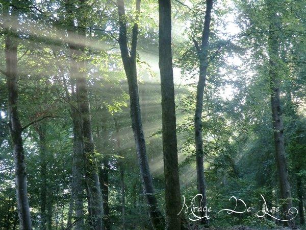 Le soleil se léve sur ma forêt...