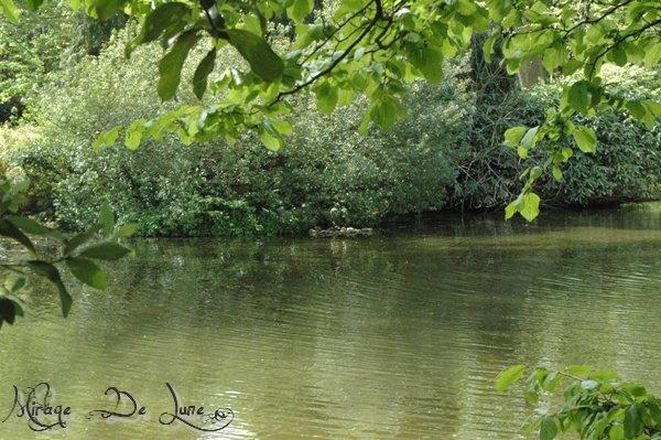 encore mon lac, mais là c'est un endroit secret... c'est ce que je voie de la fenetre de ma chambre...