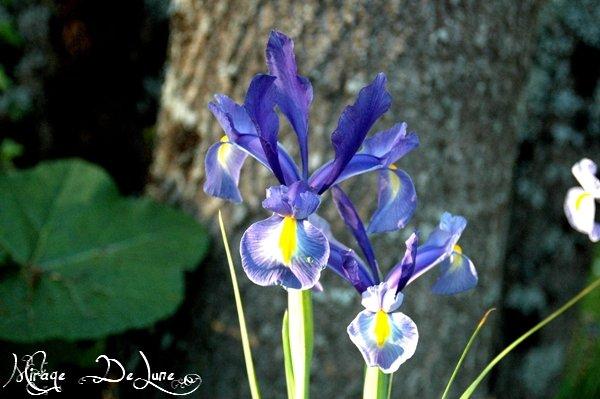 Une jolie petite fleur dans mon jardin...