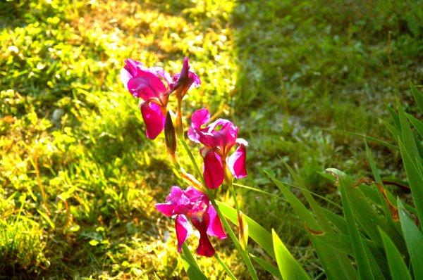 Encore de petites fleurs...