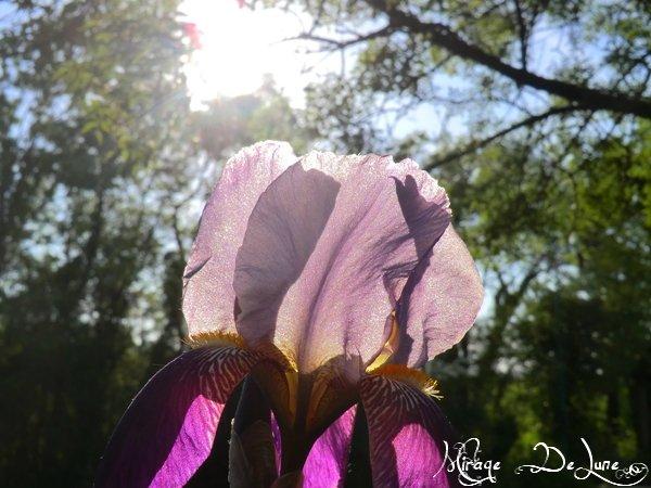 J'ai découvert une Fée dans une fleur !!!