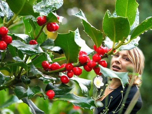 23 décembre 2005: Holly