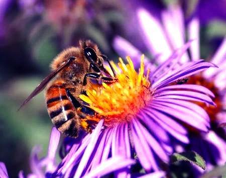 Les abeilles et les plantes : une merveille ! Allahû akbar ! A lire !
