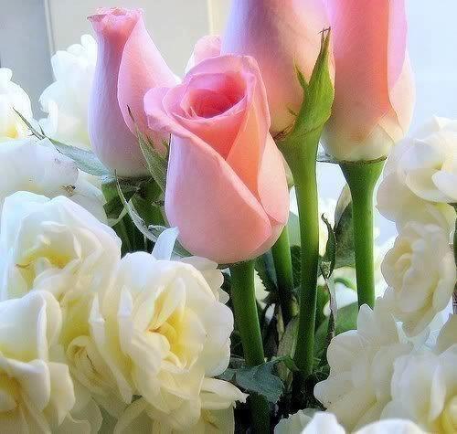 « Amour et les fleurs ne durent qu'un printemps. »