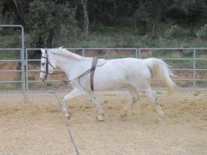 • Pony Pod est en forme! ♞