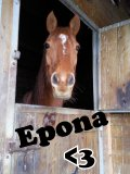 Photo de cOncOurs---cheval