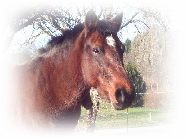 ❝ Par la force on conduit les esclaves,par la persuasion on conduit les chevaux ❞