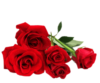 bonsoir mes amies Robert-Angel-87100 pour ces très jolies roses je les trouves superbes et ces comme ça que mon mari m'appelle sa rose d'amour je vous souhaitent une très bonne soirée suivie d'une bonne et douce nuit