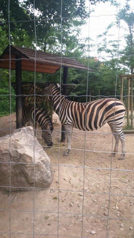 bonsoir je passe vous faire un coucou et aussi vous dirent que cette après-midi moi et mon mari et une amie nous sommes allées au zoo d'AMIENS et ont n'a passer une bonne après-midi a regarder les animeaux c'étais super j'ai été trop contente et mon amie aussi