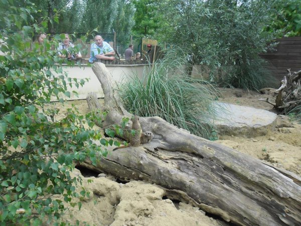 la suite de promenade au zoo