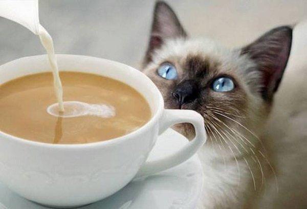 bonjour sylvie166 j'espère que tu va bien avec cette chaleur et ont ce plein pas car ont n'a du soleil je te mais un cadeau je pense que tu adore les chats je te souhaite un belle après-midi nous a 17 ont n'est invitée chez une amie