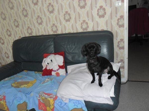 bonsoir dans bientot c'est l'anniversaire a notre petite chienne féline elle va avoir 4 ans le 13 avril et voici des belle photos et je vous fais tout plein de gros bisous du coeur ton amie gisèle car l amitiè c est très sacrè pour moi dans mon coeur
