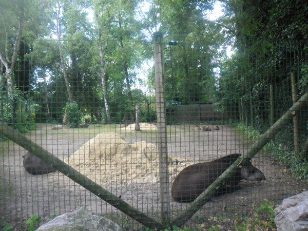 bonsoir mes amies et amis  cette après-midi nous avons étais au Zoo en famille avec vanessa thibault et mickael et nous avons bien rigolé ont vas vous mettent les photos et je vous fait tout plein de gros bisous du coeur ton amie gisèle car l amitiè c est très sacrè pour moi dans mon coeur