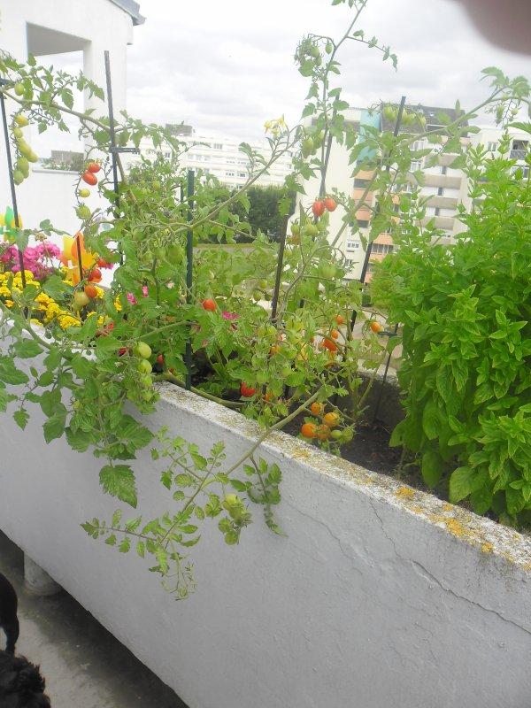 bonsoir mes amies et amis sur mon blog mes tomates cerise ont bien pousser et je vous mets quelques photos de mon balcon et j espère que vous allez bien car moi je vais bien et mercie a vous tous pour les commentaires qui me touche beaucoup au coeur car c est très gentil de pensè à moi comme ça et je vous fait tout plein de gros bisous de ton amie gisèle car l amitiè c est très sacrè pour moi dans mon coeur