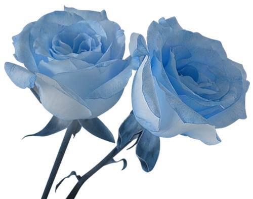 en ce dimanche j ai reçu un magnifique cadeau de mon amie blanche628 et oui je l aime beaucoup encore un grand mercie du fond du cour et j espère que tu vas bien j ai passèe un très bon week-end avec mon mari je te souhaite une très belle soirèe et je te fais tout plein de gros bisous du coeur ton amie gisèle car l amitiè c est très sacrè pour moi dans mon coeur