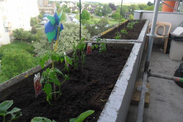 bonsoir a vous tous en ce vendredi après-midi moi et mon mari nous sommes allées chercher des tomates pour faire mon balcon et oui j'ai déjà mes fraises qui commence a pousser je vous souhaitent une très belle soirée a vous tous