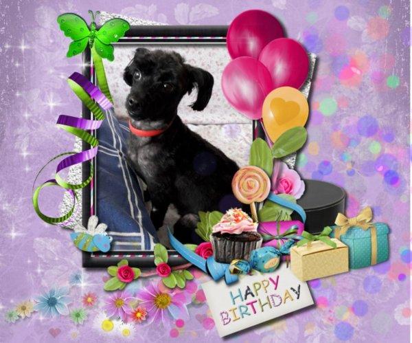 bonjour mon amie CiscoO-bbey un grand mercie pour ce magnifique cadeaux pour son anniversaire c'est gentil d'avoir pensée a féline j'ai passer un très bon week-end je t'envoie tout plein de gros bisous