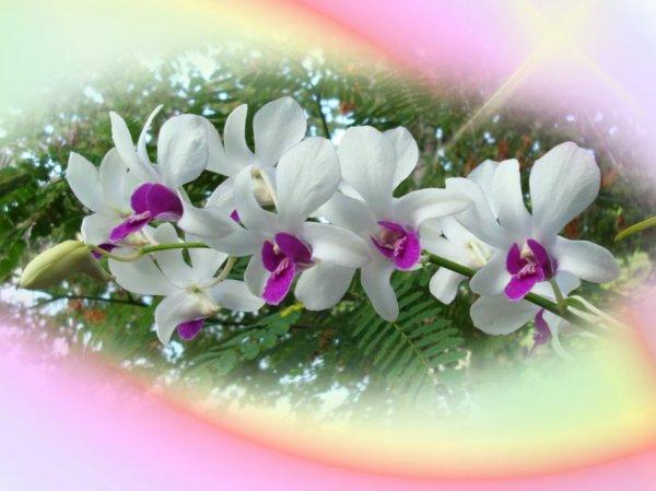 bonjour mes amies et amis en ce samedi après-midi je vous offrent un belle Orchidé je pence qu'il vous feras plaisir n'oubliée pas de le prendre si vous aimez je vous fais tout plein de gros bisous