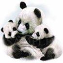 Photo de panda38