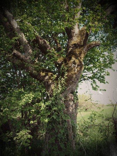 Deuxième photo (27 avril 2010) : J'ai flasher sur la forme de cette arbre, je ne sais pas vraiment pourquoi, il m'a fait penser à un arbre magique. J'ai énormément d'imagination mais il en faut!