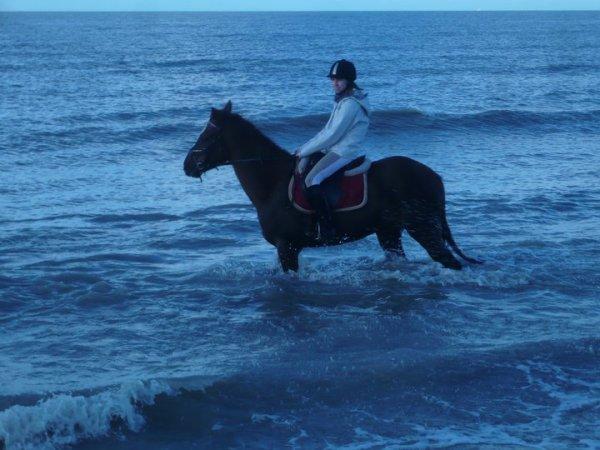 Je l' aime ce cheval !! ♥