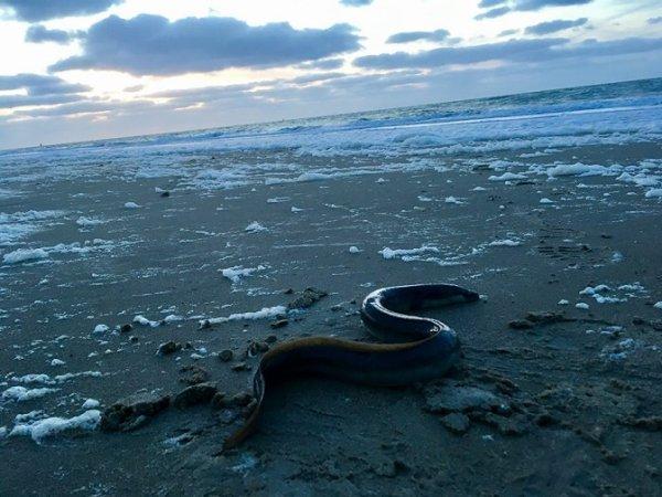 Surf plage de St Pol à basse mer (17/05/18)
