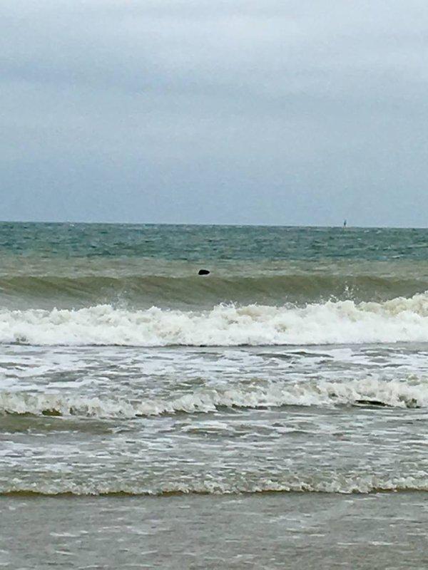 La traque du mulet plage de St Pol (19/08/18)