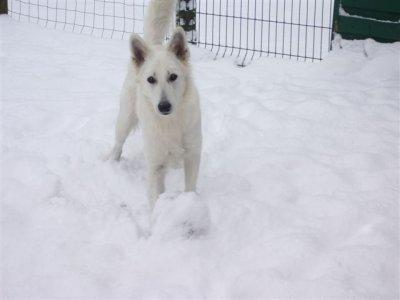 elle adore la neige !!