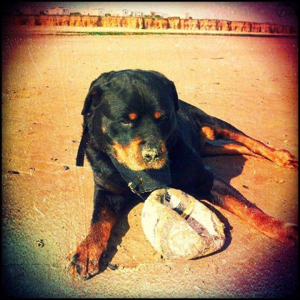 Mon chien tu me Manque R.I.P 25/0712