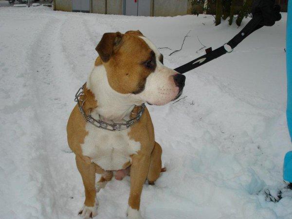 Le gros dans la neige à LISIEUX