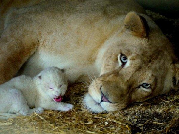 Le bb avec sa maman