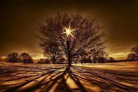 l arbre de vie