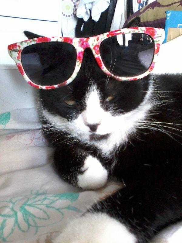 voici mon chat !!!