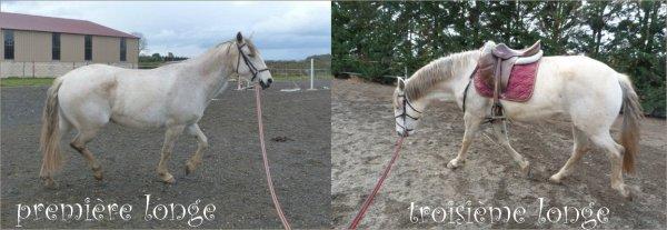 Mission trouver un cheval pour faire des balades et s'éclater dans le Tarn.