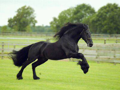 Il n'y a aucune bonne excuse pour ne pas aimer les chevaux