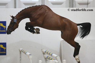 Un cheval de reve tiff des pradats - Frison qui saute ...