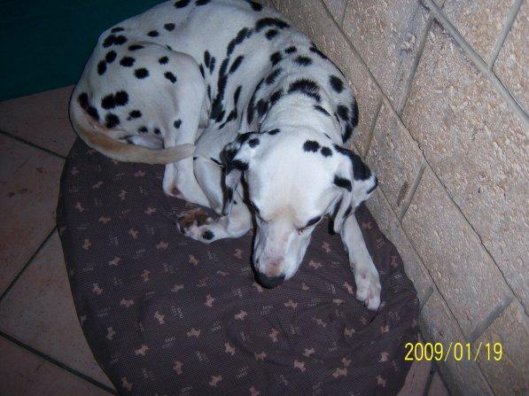 mon chien quii restera graver dans mon coeur ( BILLY je t aime :( )