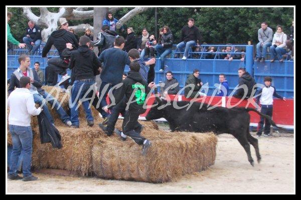 Caissargues - Le dimanche 16 Janvier 2011