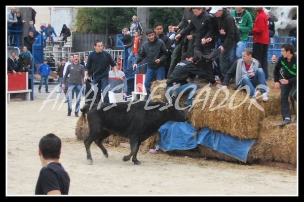 Caissargues - Le dimanche 16 Janvier 2010