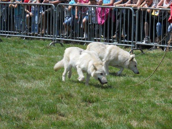 suite du spectacle: les loups
