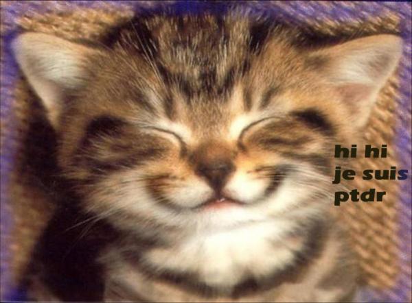 """Image De Chat Rigolo articles de le-chat-et--ses-amis taggés """"chat rigolo"""" - le chat et"""