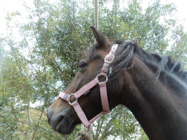 Les chevaux en priorité