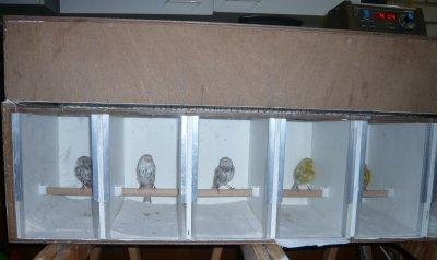 Pigment Vogels zijn klaar voor Vogel 2011