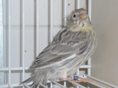 Uit het nest