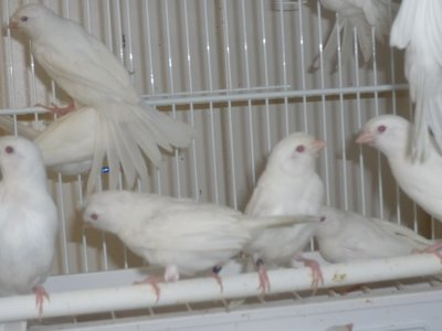 Kleine vogels worden groot