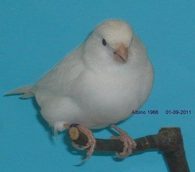 WIt 01-09-2011
