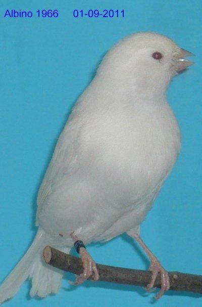 Albino 01-09-2011