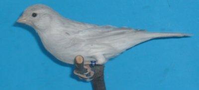 Aankoop kweekman Agaat opaal Wit 1